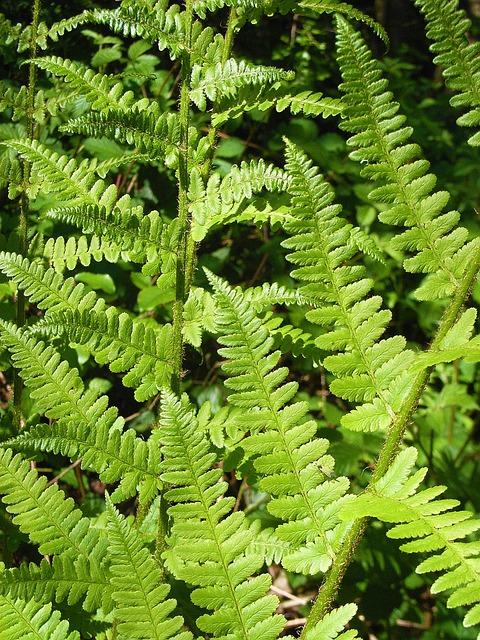 Fern, Forest, Ground, Green, Fresh, Bush, Plant, Nature