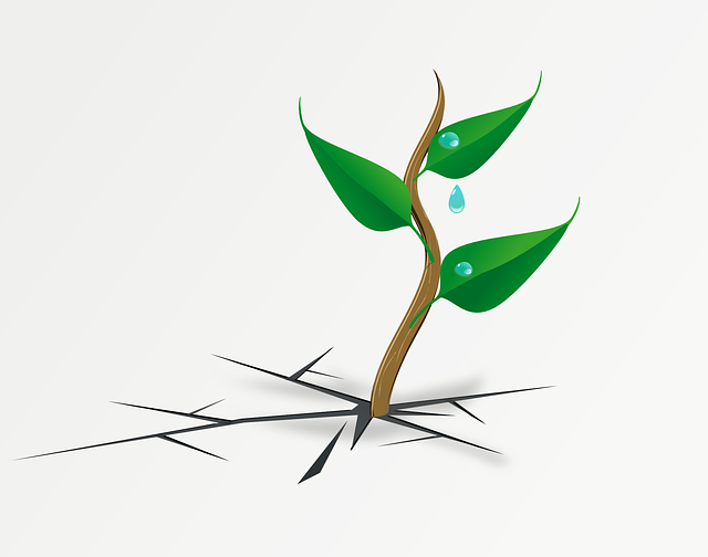 Plant, Leaves, Green, Resistance, Survive, Crack