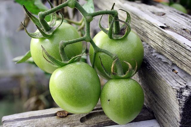 Green Tomatoes, Crop, Vegetables, Plant, Food, Midge