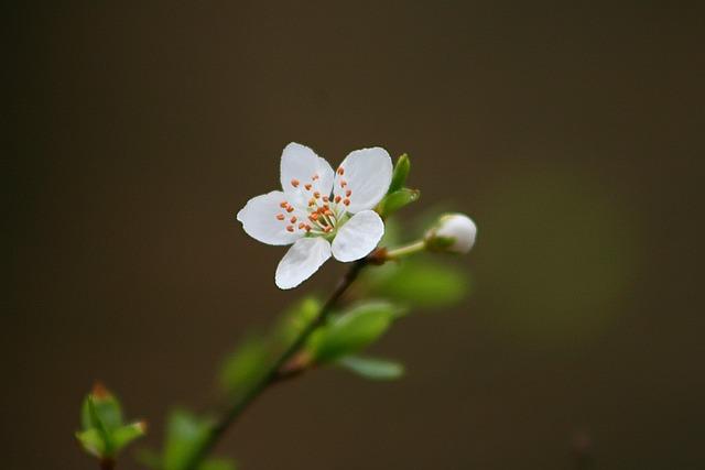 Flower, Nature, Leaf, Plant, Growth, Bud, Flowers