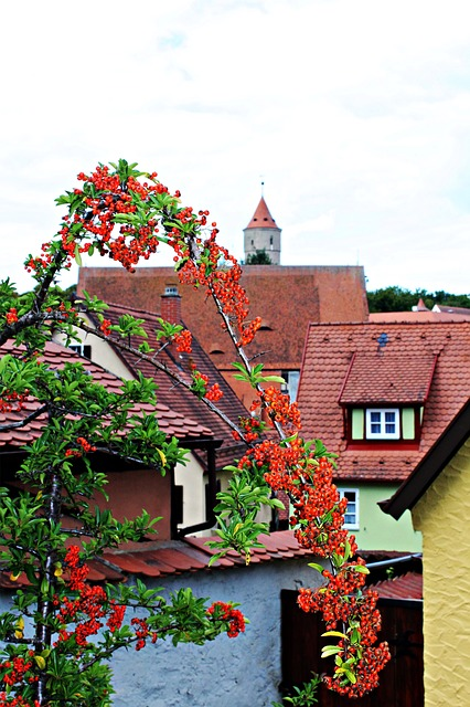 Firethorn, Plant, Old Town, Roofs, Historically, Gable