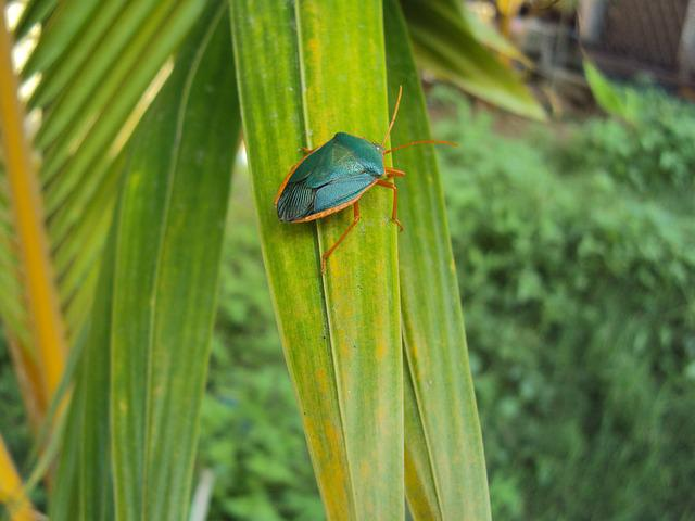 Leaf, Nature, Plant, Outdoors, Summer, Insect, Small