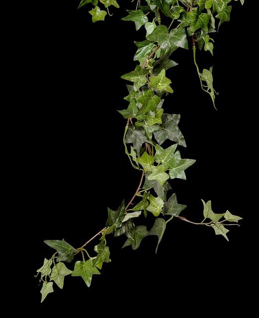 Ivy, Plant, Green