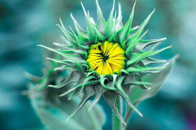 Flowers, Plant, Nature, Kind Of Wood