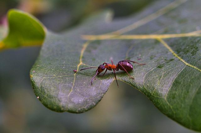 Leaf, Tree, Ant, Insect, Close Up, Nature, Plant, Green