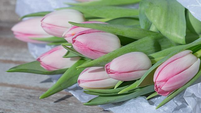 Flower, Tulip, Floral, Nature, Plant, Easter, Leaf