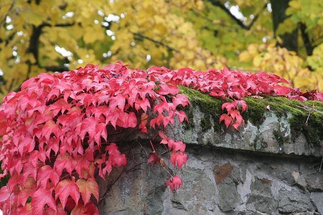 Leaf, Nature, Plant, Season, Autumn, Wine Partner