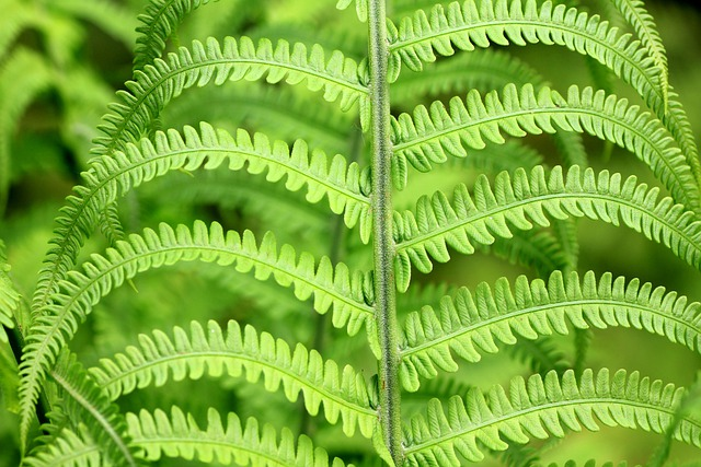 Green, Fern, Plant, Leaves, Flora