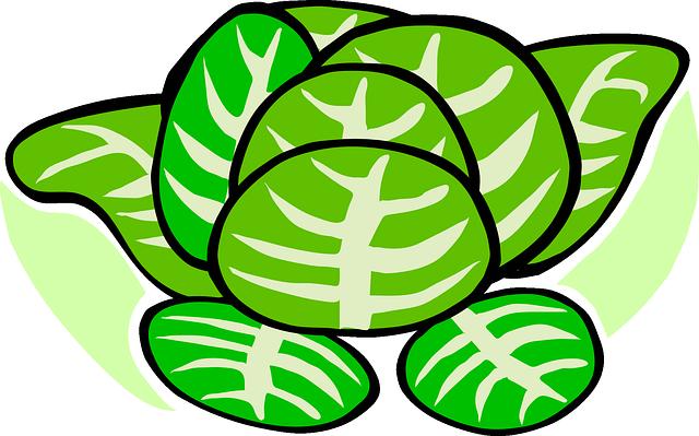 Cabbage, Lettuce, Plant, Vegetables, Green Vegetables