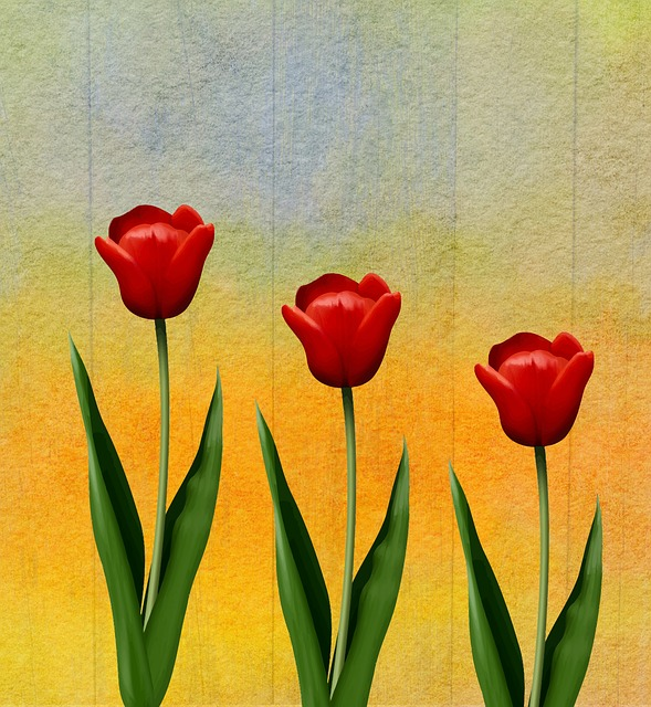 Tulip, Flower, Plant, Nature, Floral, Romance, Love