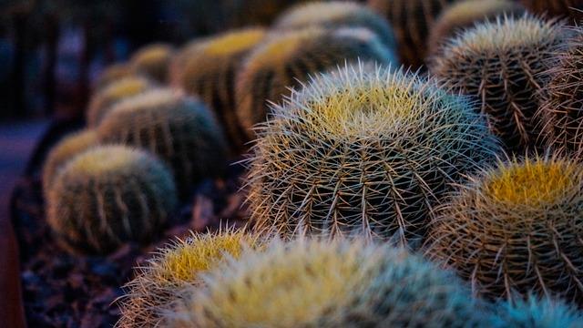 Macro, Shrub, Ornamental Shrubs, Plant, Natural