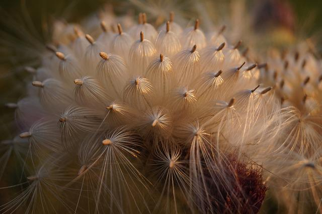 Thistle, Flower, Bloom, Mag, Plant, Nature, Meadow