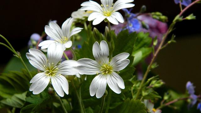 Meadow Flowers, Bouquet, Meadow, Nature, Plant
