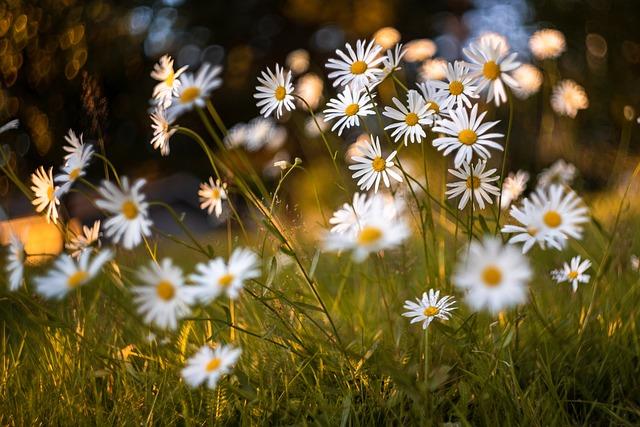 Flowers, Meadow, Plant, Grass, Petals, Evening, Nature