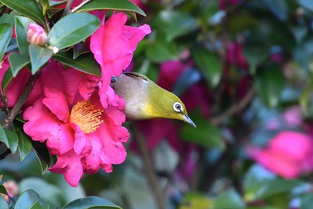Garden, Flowers, Natural, Plant, Leaf, Bird