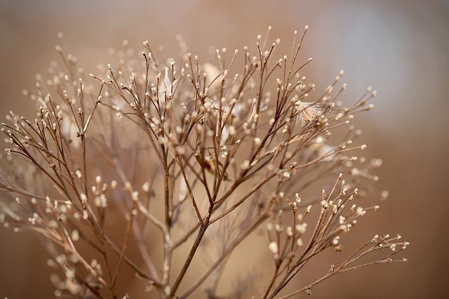 Dried Flowers, Dried, Plant, Dry Plant, Nature, Autumn