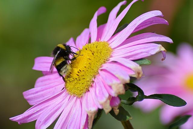 Bornholm, Bee, Blossom, Bloom, Nature, Plant