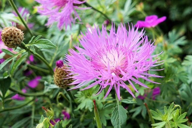 Flower, Blossom, Bloom, Diestel, Nature, Plant