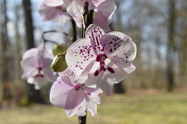 Flower, Nature, Plant, Orchid, Flowering, Bud