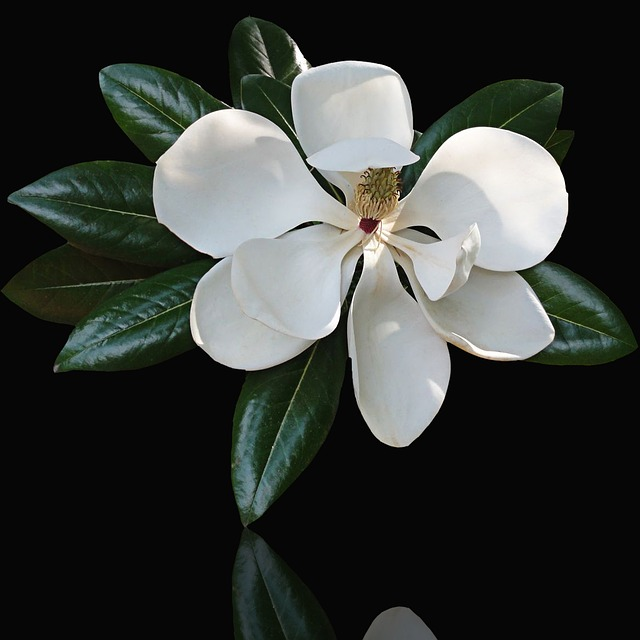 Flower, Leaf, Plant, Nature, Petal, White Flower