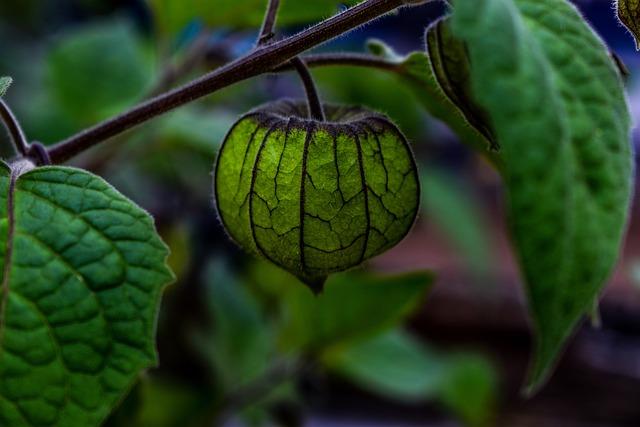 Leaf, Nature, Food, Plant