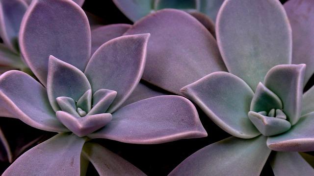 Succulent, Cactus, Plant, Houseleek, Nature, Garden