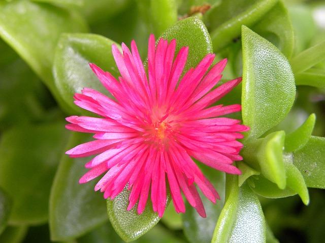 Nature, Plant, Flower, Leaf
