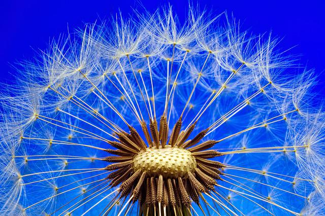Nature, Dandelion, Macro, Close, Flower, Plant, Seeds