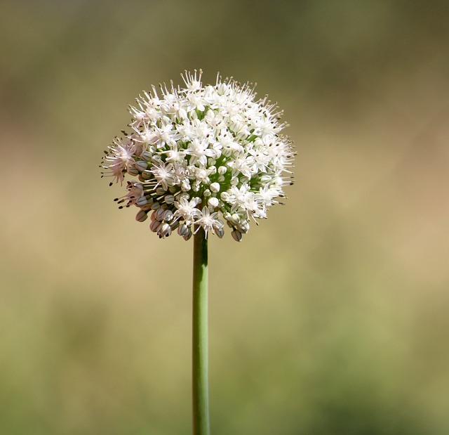 Flower, Flora, Nature, Season, Husk, Plant, Food