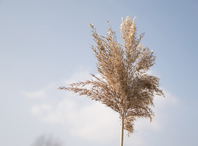 Nature, Sky, Spring, Plant, Faded