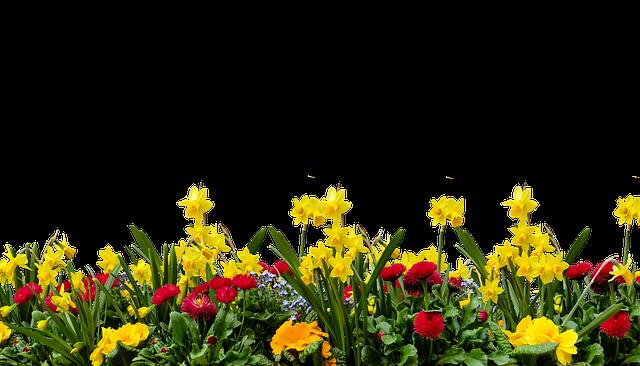 Flower, Nature, Plant, Garden, Spring, Isolated