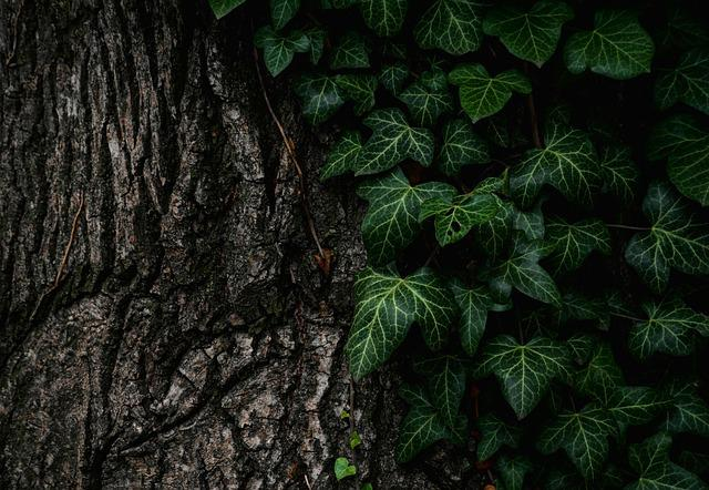 Leaves, Nature, Plant, Tree, Trunk