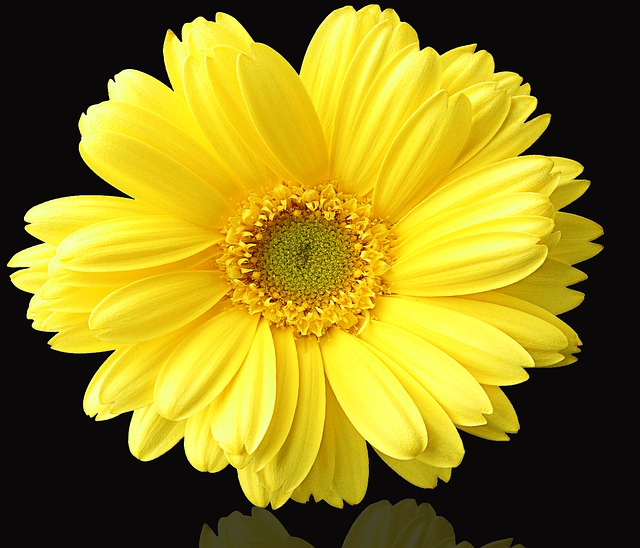 Flower, Plant, Nature, Summer, Yellow Flower