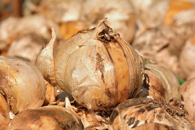 Onions, Flower Bulbs, Plant, Garden, Spring