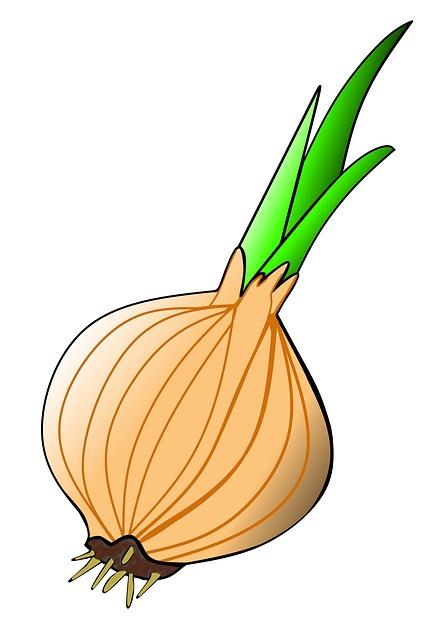 Onion, Plant, Spring, Garden, Onions, Flower, Nature