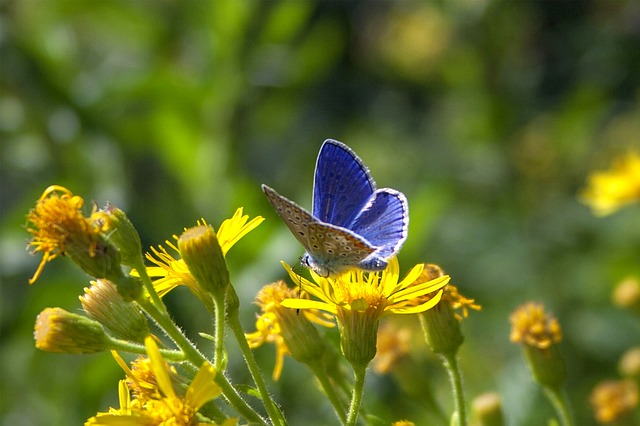 Nature, Flower, Summer, Outdoors, Plant, Butterfly
