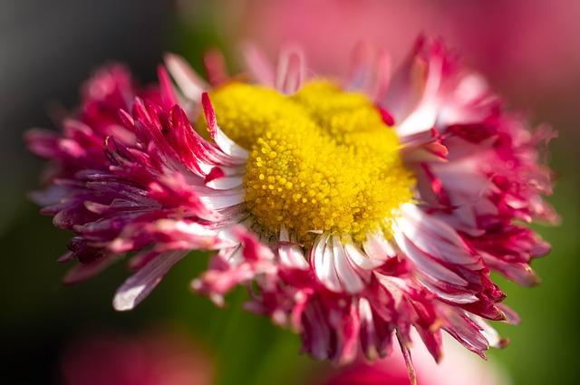 Daisy, Nature, Flower, Plant, Spring, Petal, Garden