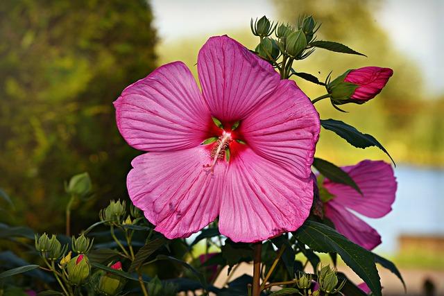 Pink Flower, Plant, Pistil, Stamen, Petal, Bud, Foliage
