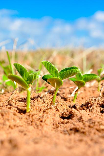 Soybeans, Agriculture, Plant, Farm, Planting