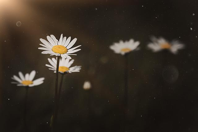 Daisy, Pointed Flower, Nature, Flower, Color, Plant