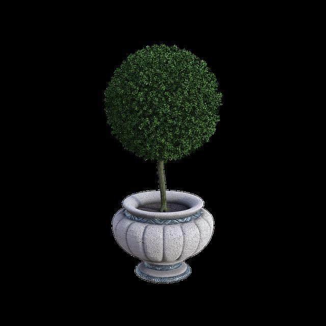 Potted Plant, Trimmed, Pot, Flower, Plant, Summer