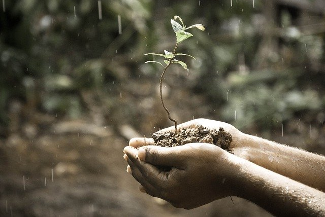 Hands, Macro, Nature, Outdoors, Plant, Rain, Soil