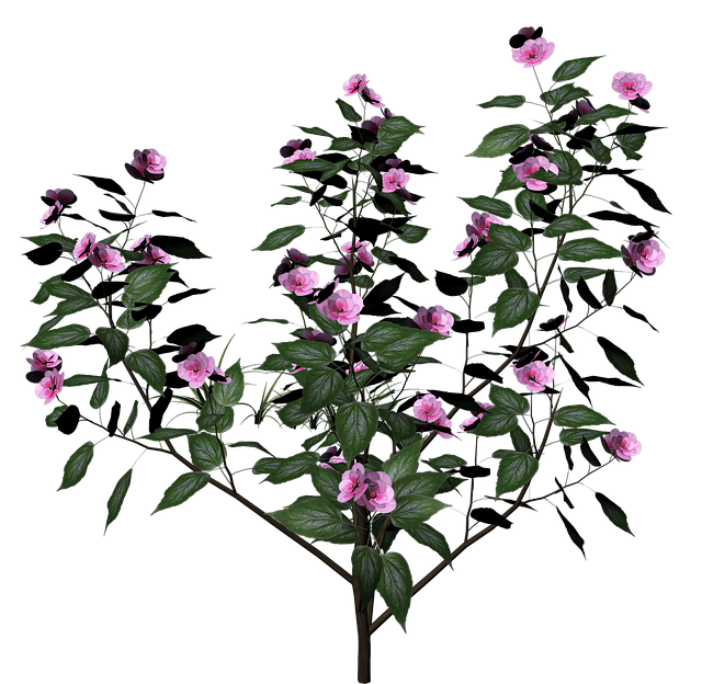 Bush, Plant, Flowers, Flowering Shrub, 3d, Render