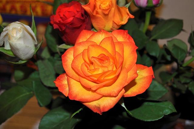 Flower, Rose, Petal, Plant, Nature, Bouquet, Love