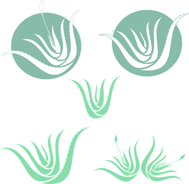 Aloe Vera, Green, Silhouette, Medicinal, Plant
