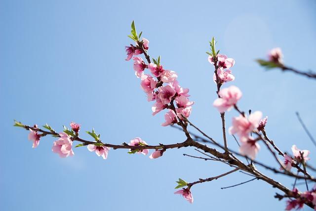 Sakura, Sky, Life, Plant, Greens, Grow Up, Nature