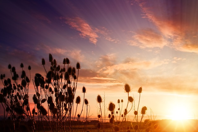 Sunset, Dawn, Nature, Sun, Sunbeam, Sky, Plant, Autumn