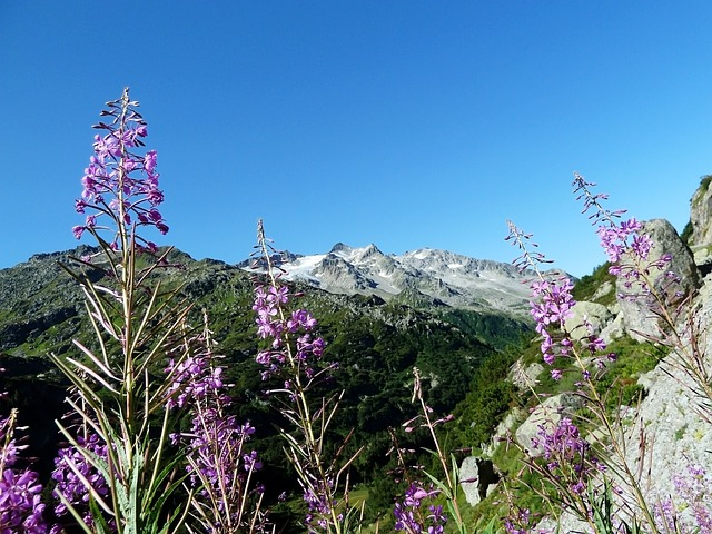 Purple, Flowers, Sky, Blue, Green, Pink, Plant