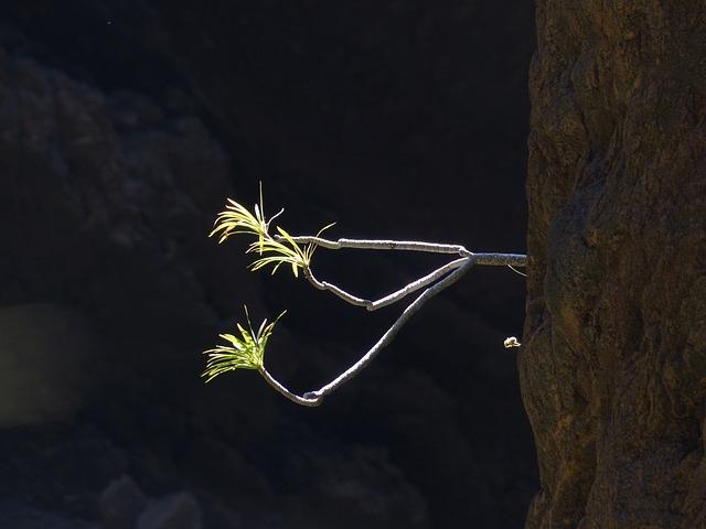 Rock, Sprouted Grains, Bush, Plant, Exotic, Spurge
