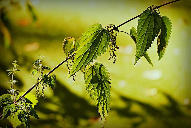 Stinging Nettle, Plant, Leaf, Vein, Pattern, Water